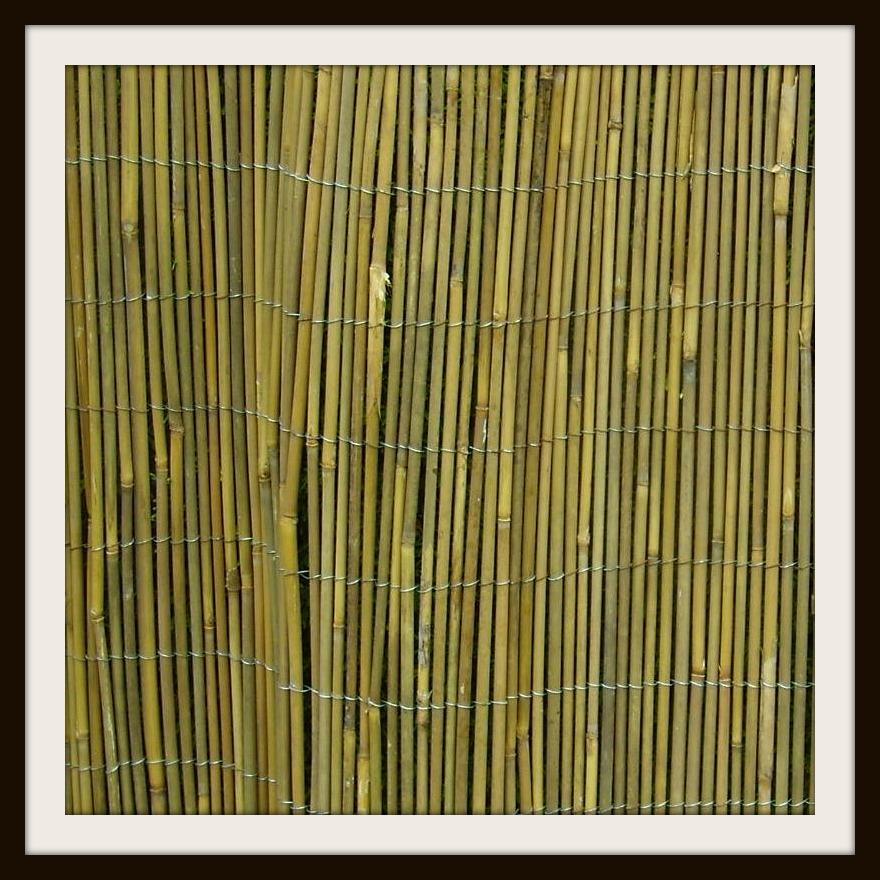 bamboewandje