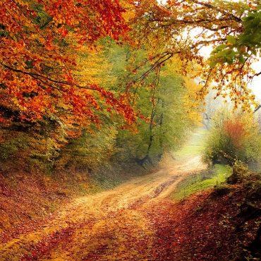 Hoe haal ik de herfst in huis en in mijn mind? (bijzondere inzichten, achter de huiselijke herfsttafels)