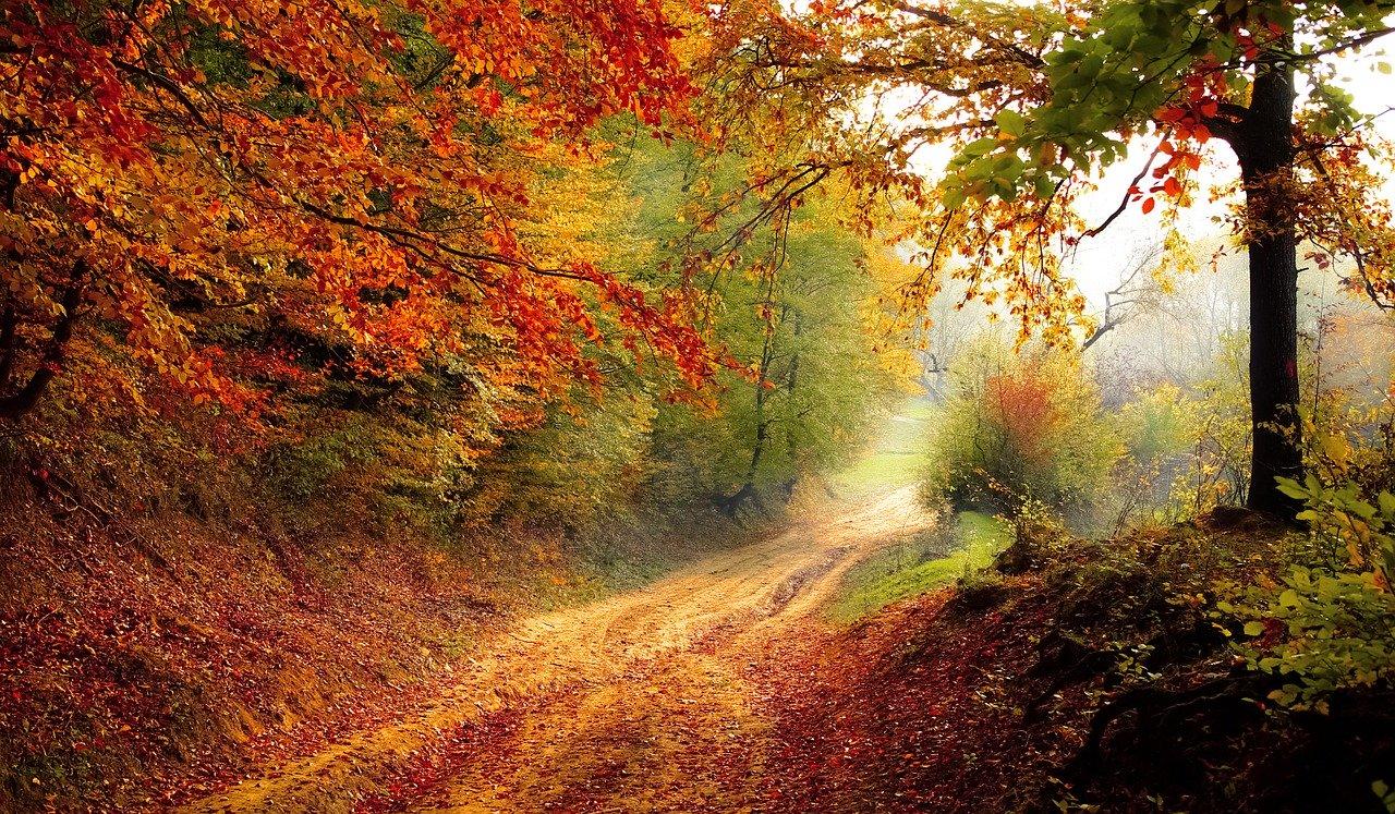 herfst in huis en in mijn mind