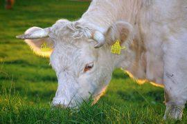 gezond en duurzaam vlees eten