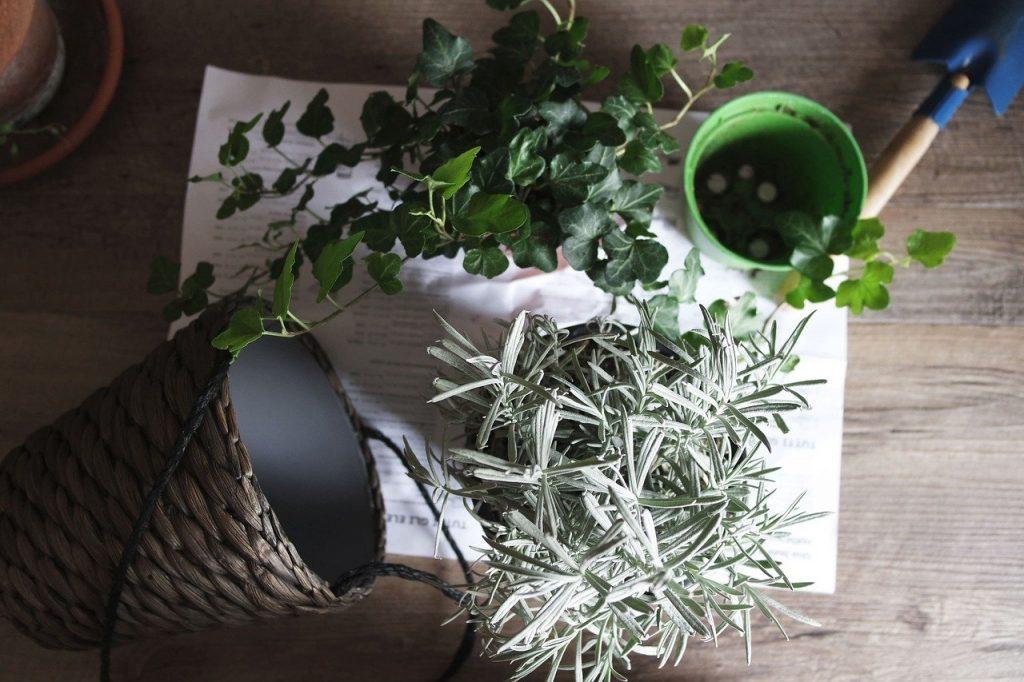 11x creatief met planten in huis (een donkere woonkamer opfrissen met kamerplanten)*