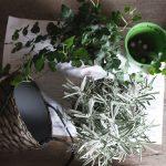 donkere woonkamer opfrissen met kamerplanten / 11x creatief met planten in huis