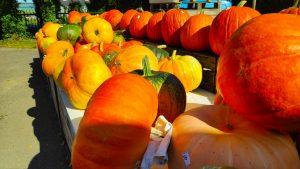 herfst sfeer pompoenen bentoboxen voor beginners