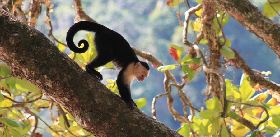 Hoe is een rondreis Costa Rica? (mijn huwelijksreis)