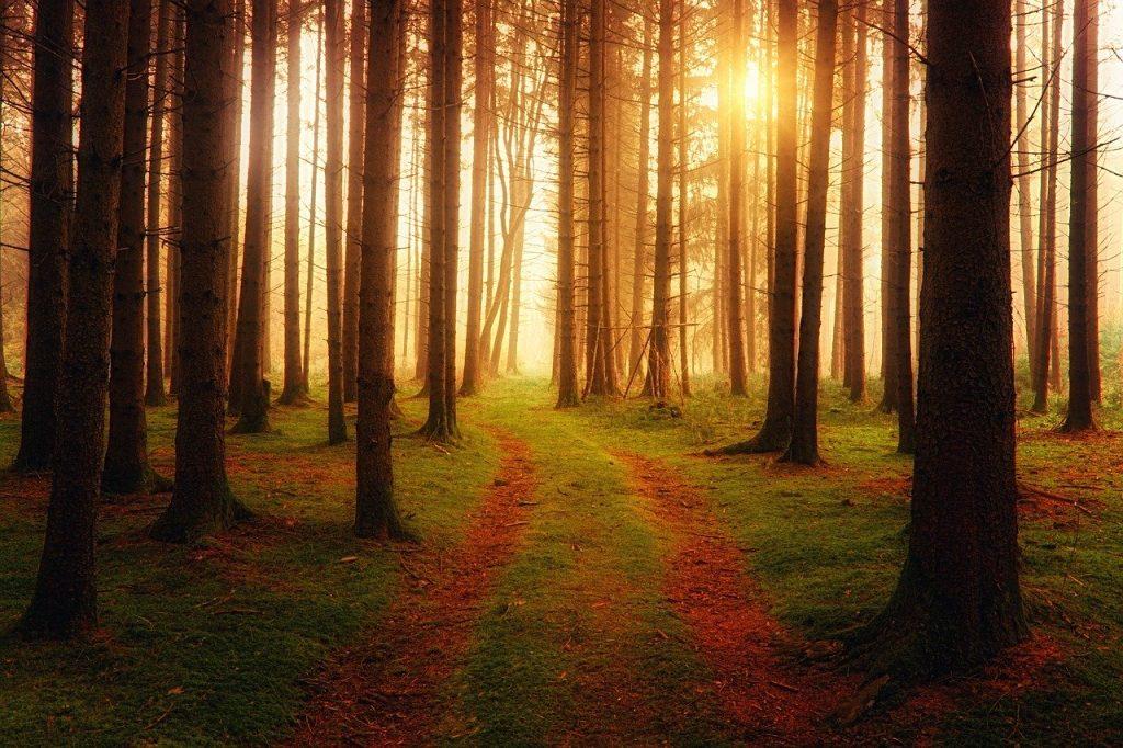ecologisch hout den