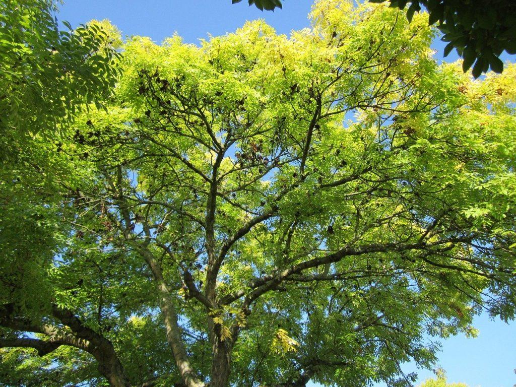 ecologisch hout essen