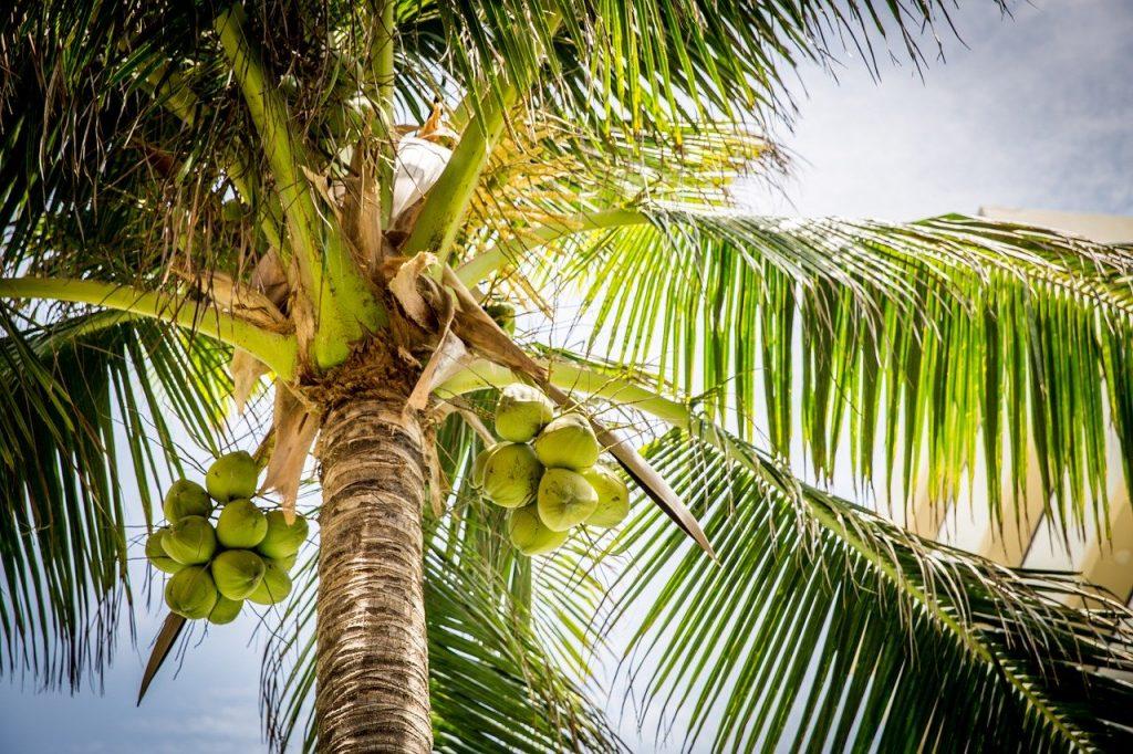ecologisch hout kokos