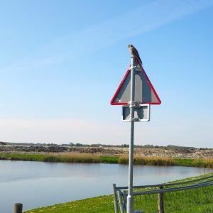 roofvogels Buytenpark in Zoetermeer