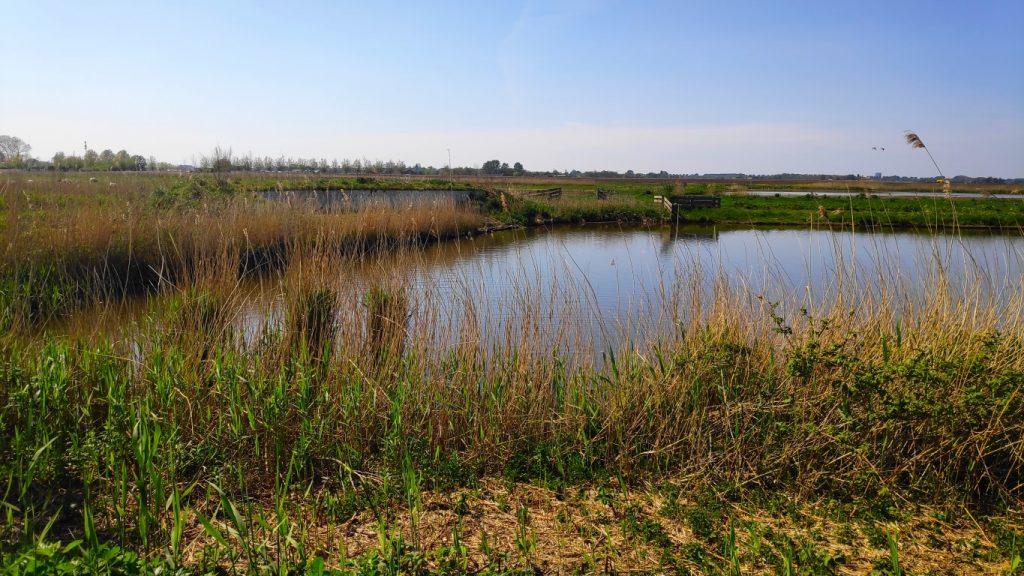 zwaluwnestjes Buytenpark in Zoetermeer