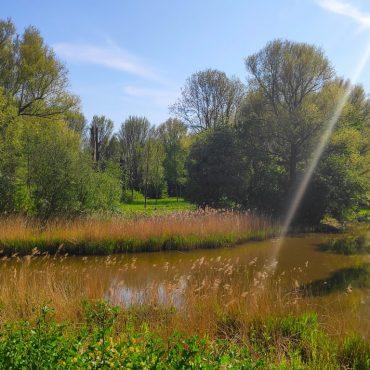 De leukste natuurgebieden, parken & bossen in Zoetermeer (met kids erop uit!)