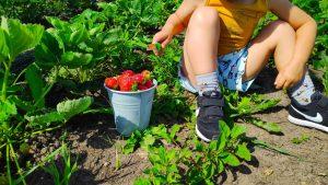 kinderen leren over gezond eten