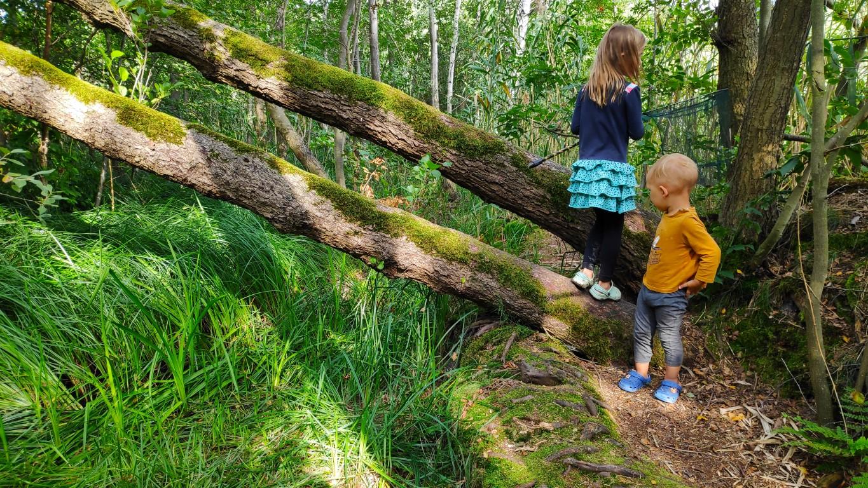 verzamelen tijdens boswandeling