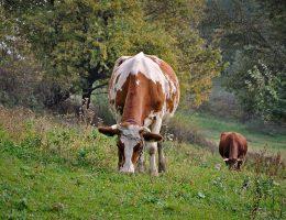 biologisch vlees van Zorg & Natuur