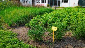 zelfoogsttuin in Zoeterwoude www.mamasjungle.nl