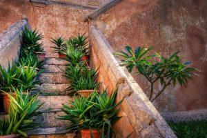 duurzame traprenovatie met planten